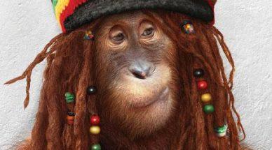 monkey-20